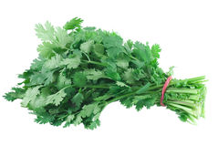 Cilantro. A bunch cilantro on white background royalty free stock images