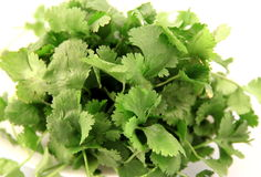 Cilantro. Fresh cilantro on qhite background stock image
