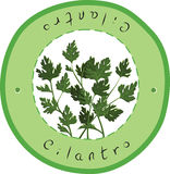 cilantro stock illustratie