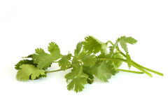 Cilantro. (also called coriander) isolated over white background royalty free stock photos