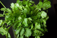 Cilantro. Closeup on dark table background stock photos