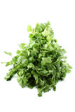 Cilantro or coriander Royalty Free Stock Image