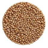 Cilantro coriander seeds Stock Photo