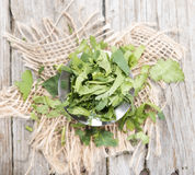 Cilantro Stock Photo