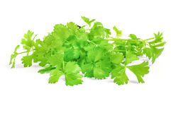 Cilantro herb isolated on white background. Cilantro herb on a white background with clipping path royalty free stock photography