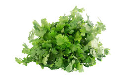 Cilantro isolated on white. Cilantro isolated on a white background. AKA chinese parsley, coriander and dhania Royalty Free Stock Images