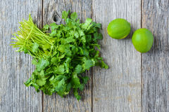 Cilantro and Limes Royalty Free Stock Image