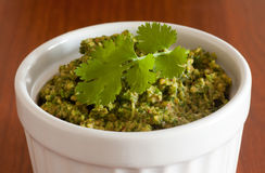 Cilantro pesto Stock Images