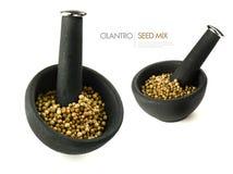 Cilantro Seed Mix Stock Images