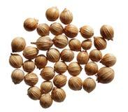 Cilantro Seeds Stock Image