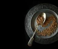 Cilantro Seeds Stock Images