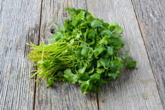 Cilantro. On a Wooden Background royalty free stock image