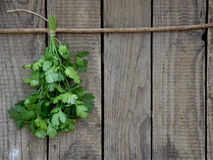 Cilantro on a wooden background. Bunch of cilantro on a wooden background stock photo