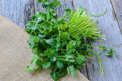 Cilantro on Wooden Background Stock Images