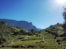 Cilaos lens cultivation in Reunion Island royalty free stock image