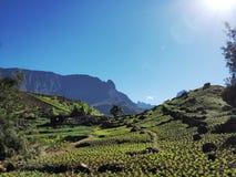 Cilaos linsodling i Reunion Island royaltyfri bild