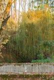 Cilavegna trän Royaltyfri Fotografi