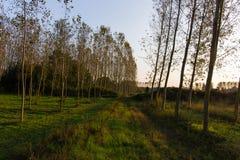 Cilavegna woods Stock Photo