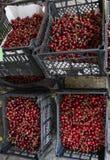 Ciliege Ciliegia Merce nel carrello organica delle ciliege su un mercato dei farmer's Fondo rosso della ciliegia Struttura fres Fotografie Stock Libere da Diritti