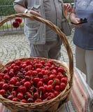Ciliege Ciliegia Merce nel carrello organica delle ciliege su un mercato dei farmer's Fondo rosso della ciliegia Struttura fres Immagini Stock Libere da Diritti