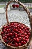 Ciliege Ciliegia Merce nel carrello organica delle ciliege su un mercato dei farmer's Fondo rosso della ciliegia Struttura fres Fotografie Stock