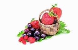 Ciliege e fragole delle fragole di bosco in un piccolo canestro Fotografia Stock
