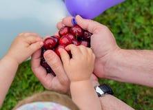 Ciliege rosse a disposizione dell'uomo e delle mani del bambino nel giardino immagini stock