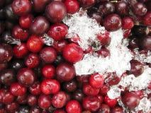 Ciliege rosse fresche sul servizio di via del ghiaccio Fotografia Stock