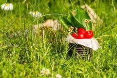 Ciliege rosse in latta d'annata in alta erba Fotografie Stock Libere da Diritti