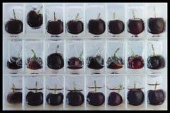ciliege Semi-lustrate Fotografia Stock
