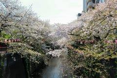 Ciliegi lungo il fiume di Meguro, Meguro-ku, Tokyo, Giappone in primavera Fotografie Stock Libere da Diritti