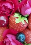 ciliegia della fragola, fondo rosa del fiore del rinfresco del dessert di salute di freschezza del mirtillo Fotografia Stock Libera da Diritti