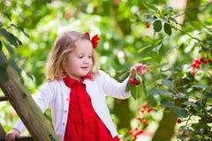 Ciliegia di raccolto della bambina Fotografie Stock Libere da Diritti