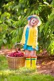 Ciliegia di raccolto della bambina dall'albero del giardino Fotografie Stock