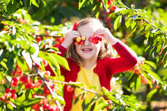 Ciliegia di raccolto della bambina nel giardino della frutta Fotografia Stock Libera da Diritti