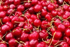 Ciliegia, ciliegia fresca rossa luminosa con i tagli verdi, fondo fresco dell'alimento della ciliegia Fotografie Stock Libere da Diritti