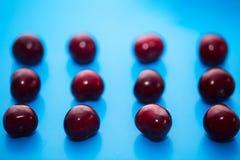Ciliegia isolata Raccolta delle ciliege isolate su fondo blu Fotografia Stock Libera da Diritti