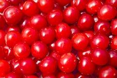 Ciliegia lanuginosa della frutta rossa Fotografia Stock