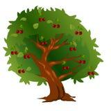 Ciliegio con i frutti e le foglie verdi Fotografia Stock Libera da Diritti