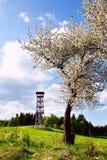 Ciliegio di fioritura nella torre del fondo Fotografia Stock