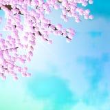 Ciliegio di Pasqua su cielo blu Fotografia Stock