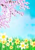 Ciliegio di Pasqua sul prato Fotografia Stock Libera da Diritti