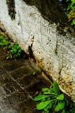 Cilindro di pietra Fotografia Stock