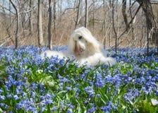 Cilla Forest Carpet Surrounding Canine Beauty fotografia de stock
