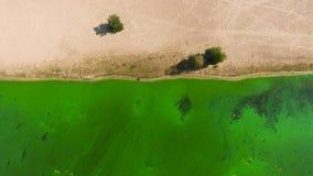Cima aerea giù della sponda del fiume sabbiosa e dell'acqua inquinanti molto con le alghe verdi stock footage