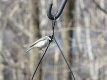 In cima all'alimentatore dell'uccello Immagini Stock Libere da Diritti