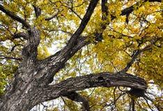 Cima d'albero Immagini Stock Libere da Diritti