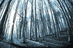 Cima d'albero fotografie stock libere da diritti