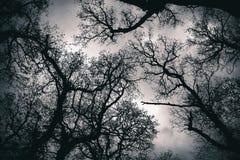Cima d'albero del baldacchino Fotografie Stock Libere da Diritti