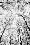 Cima d'albero di Beckground Fotografia Stock